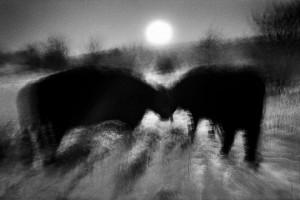 Lezing fotograaf John Lambrichts