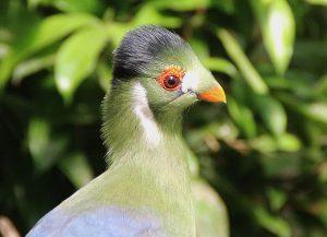 """Bezoek Vlindertuin """"Costa Rica"""" Someren"""