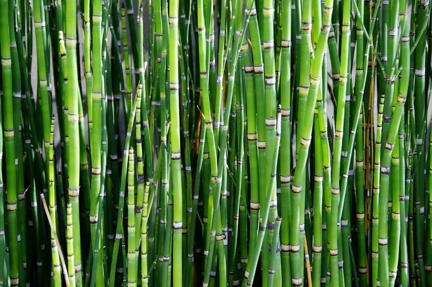 bamboo-800869_1280